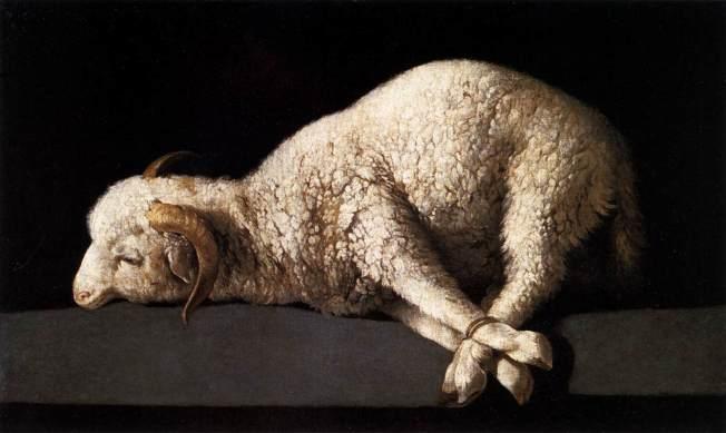 lamb tied