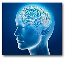 brain-blue