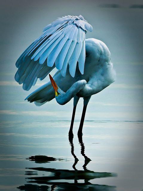 bird-preening