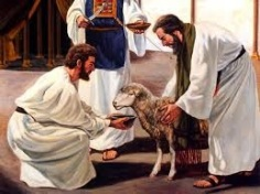 lamb-brought-to-priest-for-sacrifice